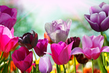 Beautiful Spring Flowers Reproduction photographique par  Monia