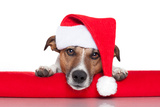 Christmas Dog Santa Baby Fotografisk trykk av Javier Brosch