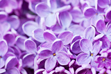 Lilac Flowers Background Reproduction photographique par  Roxana_ro
