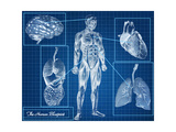 Human Blueprint Poster by  Digital Storm