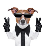 Cool Dog Photographic Print by Javier Brosch