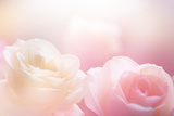 Beautiful Flowers Made with Color Filters Fotografie-Druck von Timofeeva Maria