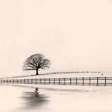 Winter Oak Tree in Snow Valokuvavedos tekijänä  marilyna