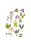 Herbs and Flowers of Summer Posters tekijänä  marilyna