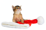 Merry Christmas Cat with Santa Hat on White Fotografie-Druck von  nelik
