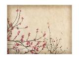 Spring Plum Blossom Blossom on Old Antique Vintage Paper Background Kunstdrucke von  kenny001