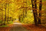 Pathway in the Autumn Forest Fotografie-Druck von  sborisov