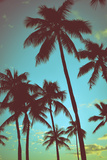 Vintage Tropical Palms Stretched Canvas Print by Mr Doomits