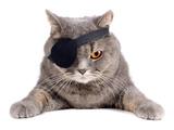 Pirate Cat Fotografisk trykk av  eAlisa