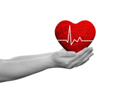 Red Human Heart Sign or Symbol with Pulse Held in Human Man or Woman Hands Fotoprint av  bestdesign36