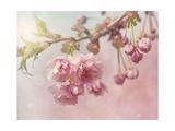 Pink Cherry Blossom Tree Poster von  egal