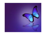 Morpho Blue Butterfly on Dark Blue Background Plakater af  suns_luck