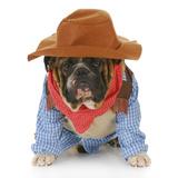 Dog Dressed Up Like a Cowboy Fotografisk trykk av Willee Cole