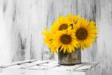 Background Still Life Flower Sunflower Wooden White Vintage Toile tendue sur châssis par  FOTOALOJA