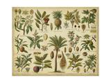 Classification of Tropical Plants Affiche par  Vision Studio