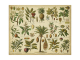 Classification of Tropical Plants Kunstdruck von  Vision Studio