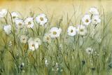 Daisy Spring II Kunstdrucke von Tim O'toole