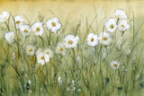 Daisy Spring II Poster by Tim O'toole