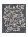 Vintage Fruit and Floral III Reproduction giclée Premium par Megan Meagher