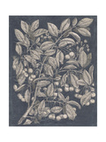 Vintage Fruit and Floral III Premium Giclee Print by Megan Meagher
