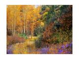 Lost Canyon Larkspurs I Kunstdruck von Chris Vest