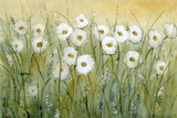 Daisy Spring I Prints by Tim O'toole