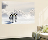 Emperor Penguins In Antarctica Wall Mural by Jan Martin Will