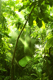 Tropical Forest, Trees In Sunlight And Rain Seinämaalaus tekijänä  odmeyer