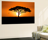 A Silhouetted Acacia Tree, Acacia Species, at Sunset Wall Mural by Jeff Mauritzen