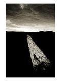 Dead Log at Floras Lake Konst av Shane Settle