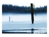 Dead Tree in Hyatt Lake Poster av Shane Settle