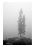 Two Trees on Mount Washington Print by Shane Settle