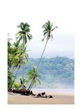 Costa Rica Palms Posters av Shane Settle
