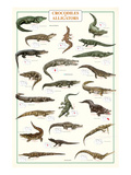 Crocodiles and Alligators Plakater