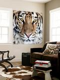 Bengal Tiger Eyes Wall Mural by C. McNemar