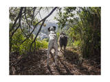 Two Dogs in Woods with View Fotografisk trykk av Henri Silberman