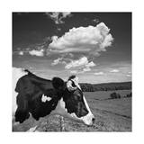 Cow Cloud Kingston, New York Photographic Print by Henri Silberman