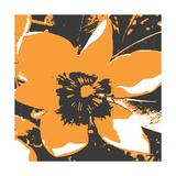 Blooming Orange Premium Giclee-trykk av Herb Dickinson