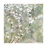 Pear Blossoms II Kunst av Herb Dickinson