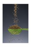 1 Tablespoon Celery Seed Fotografie-Druck von Steve Gadomski