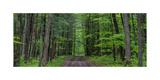 Manistee National Forest Michigan Fotografie-Druck von Steve Gadomski