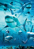 Shark Infested Prints
