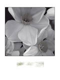 Narcissi for the Wedding II Prints by Richard Sutton