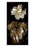 White Flowers Delight II Kunstdruck von Richard Sutton