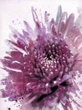 Colour of Love II Giclee Print by Ken Hurd