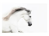 White on White Plakater af Melanie Snowhite