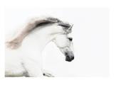 White on White Poster by Melanie Snowhite