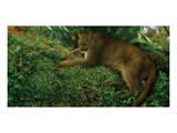 Panther Pause Prints by Steve Hunziker