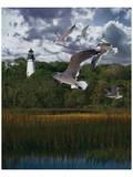 Gullage Light II Prints by Steve Hunziker