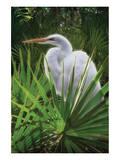 Palmetto Egret Print by Steve Hunziker